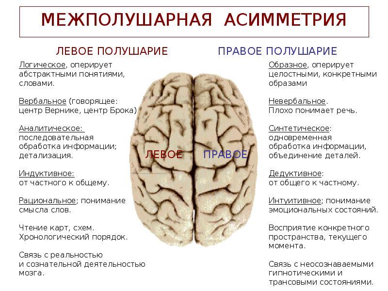 Функциональная межполушарная асимметрия головного мозга в практике врача-подиатра